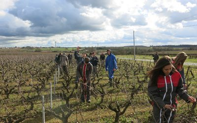 La taille des vignes – DERVAL (44)